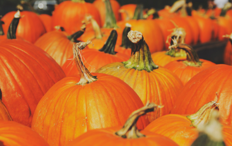 Best Pumpkin Patches to Visit in and Near Livermore